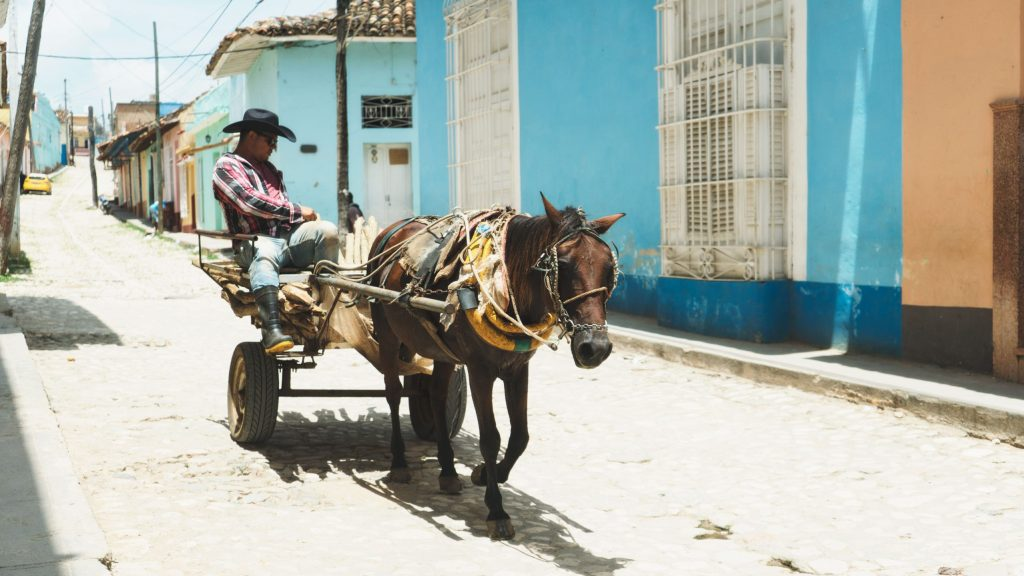 cheval à trinidad