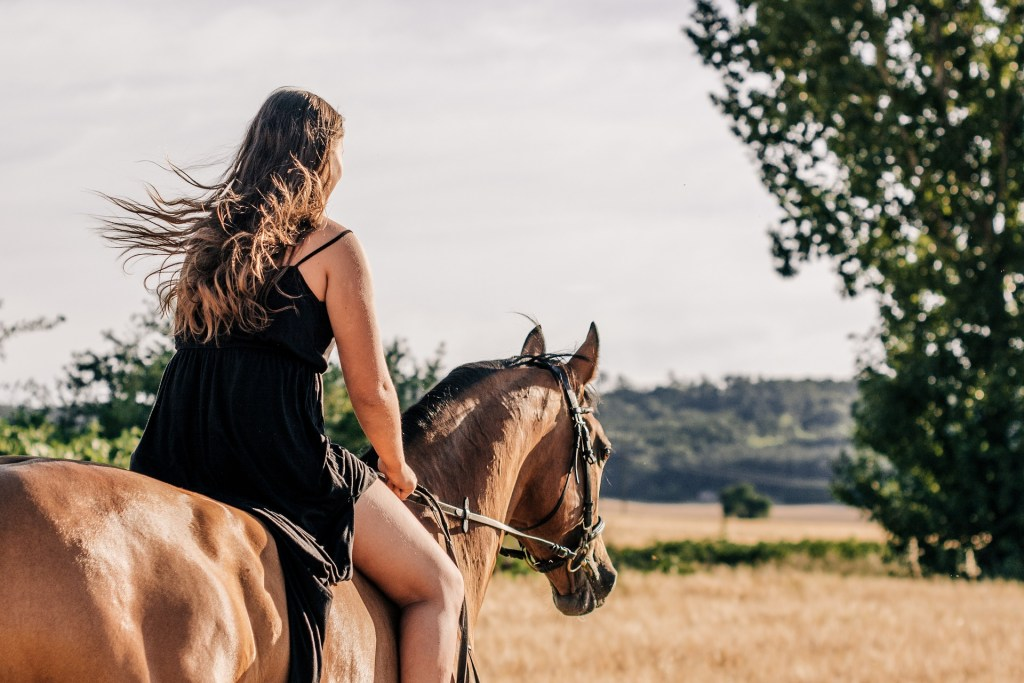 cheval en pleine nature