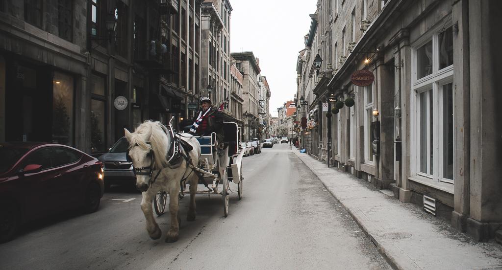 une calèche dans les rues de Montréal
