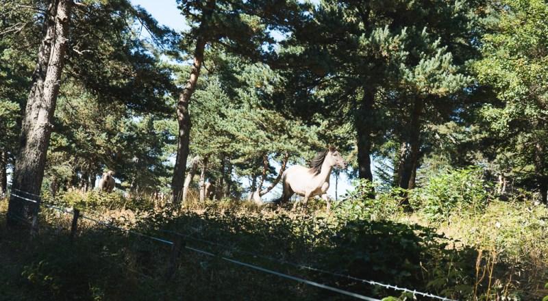 cheval à la vallée d'amarok