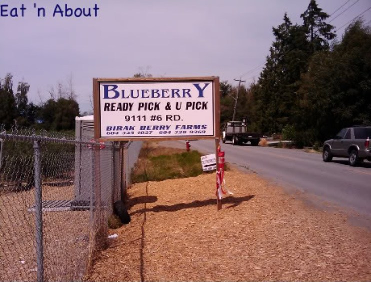 Blueberry U-Pick at Birak Farm