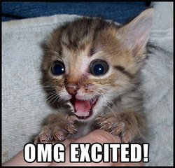 "Cat with ""OMG Excited!"" caption"