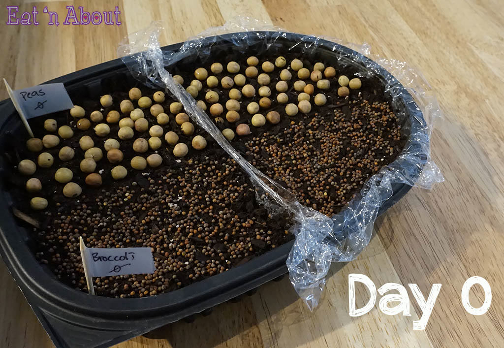 Seed sprouting - day 0