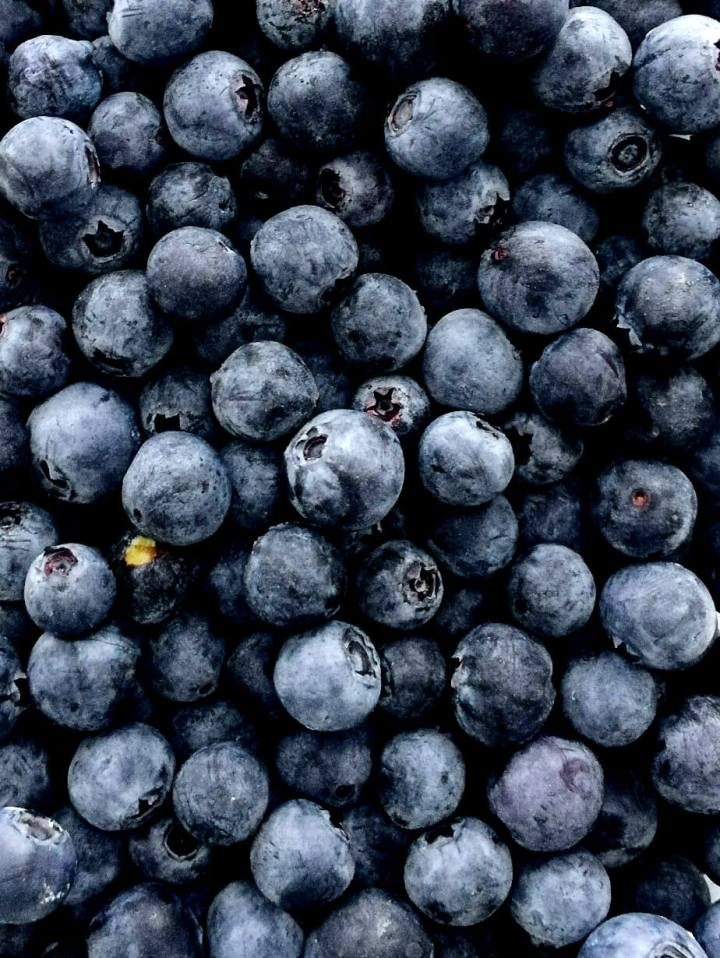 blueberries close up photo (1)