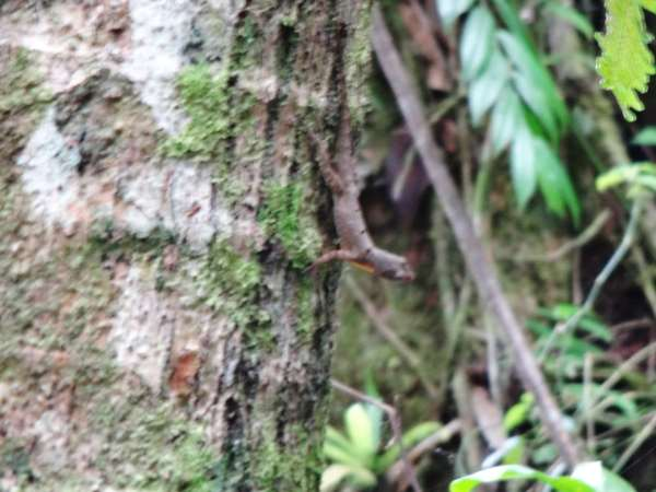 wildlife of the rainforest: lizard