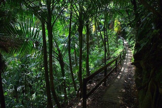El Yunque Rainforest Tour