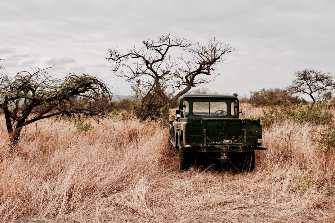 Africa: Things to Avoid When Doing a Self-Drive Safari - Eat