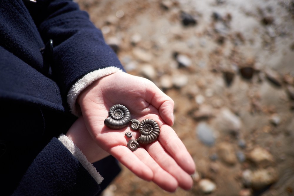 Fossil Hunting Dorset