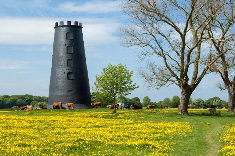 Beverley Westwood, East Yorkshire