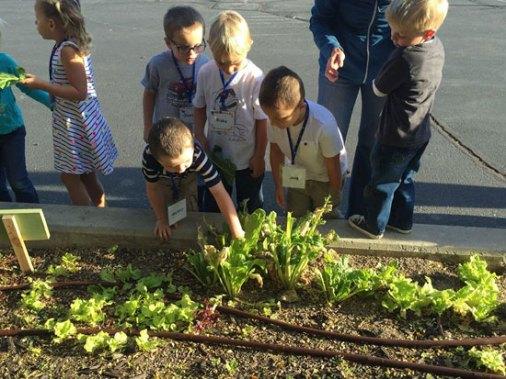 lettuce-at-Trailside