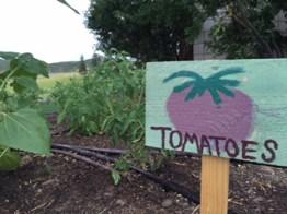 tomatoes-tses-2016