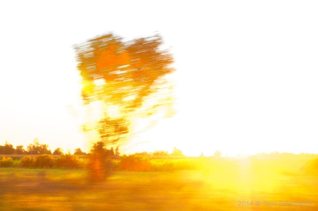 Yellow Sunshine(c)