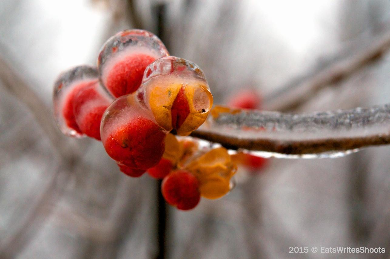Frozen_Berries2