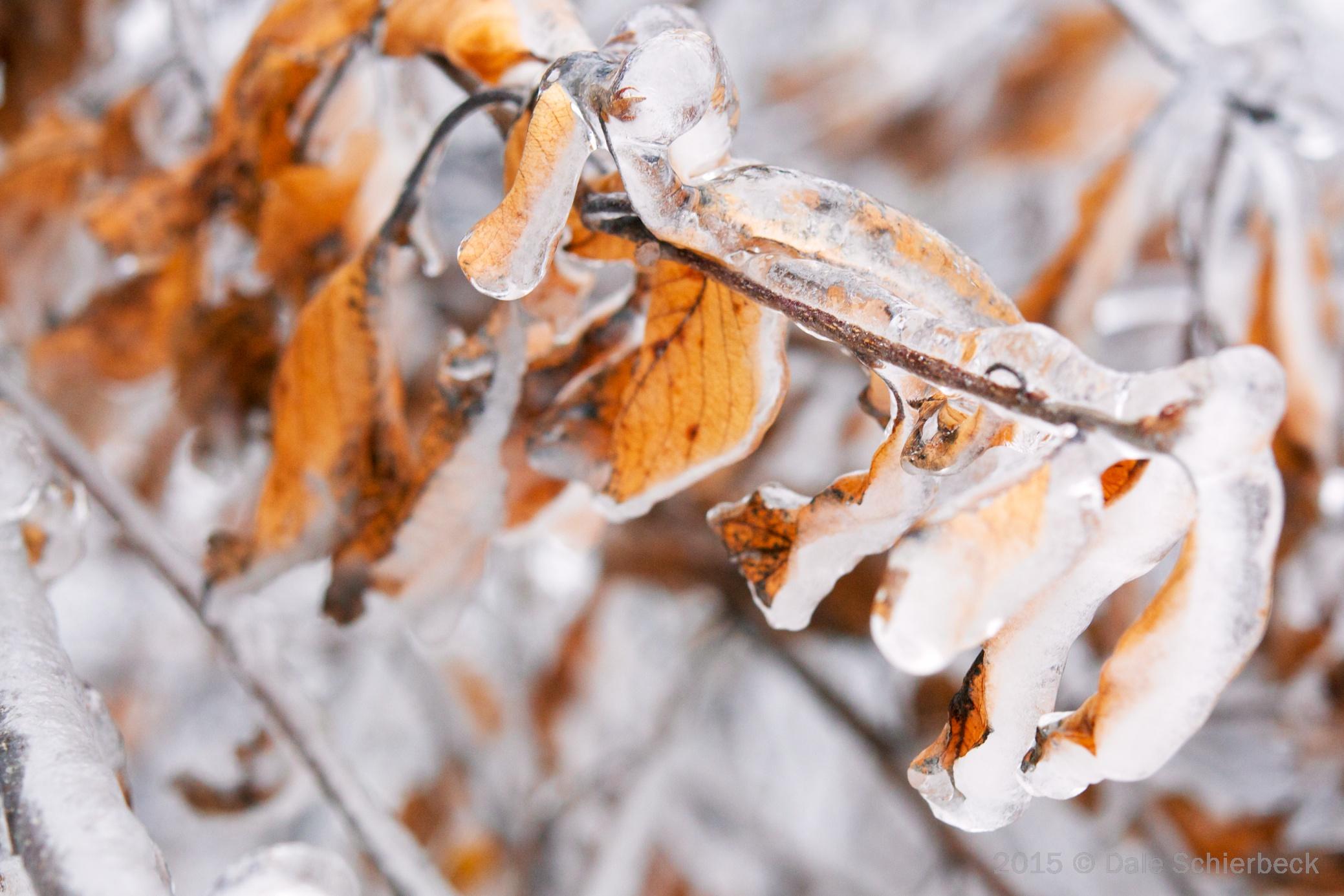 frozen leaves1