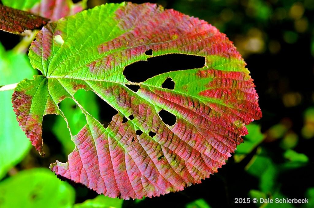 Leaf Change4