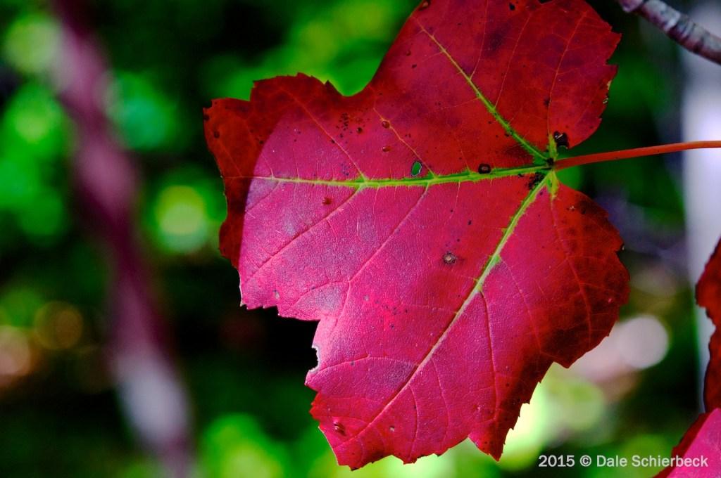 Leaf Change8