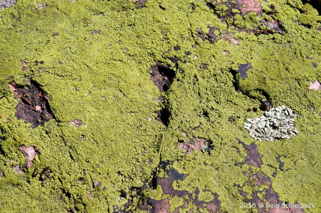 Lichen the Moss5