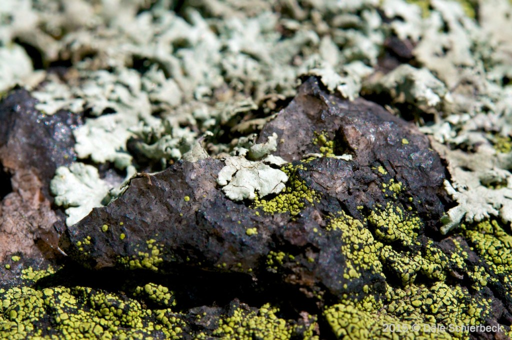 Lichen the Moss6