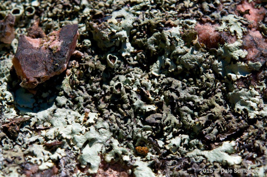 Lichen the Moss7