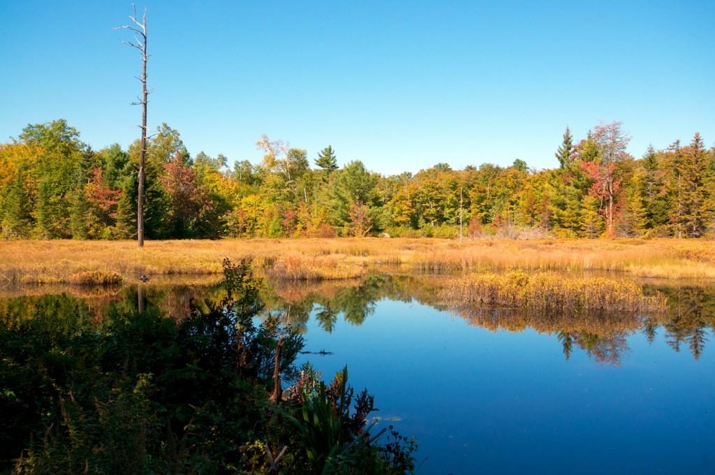 Standing Upon a Beaver Dam