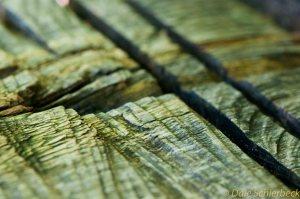 Wood_Cut-2
