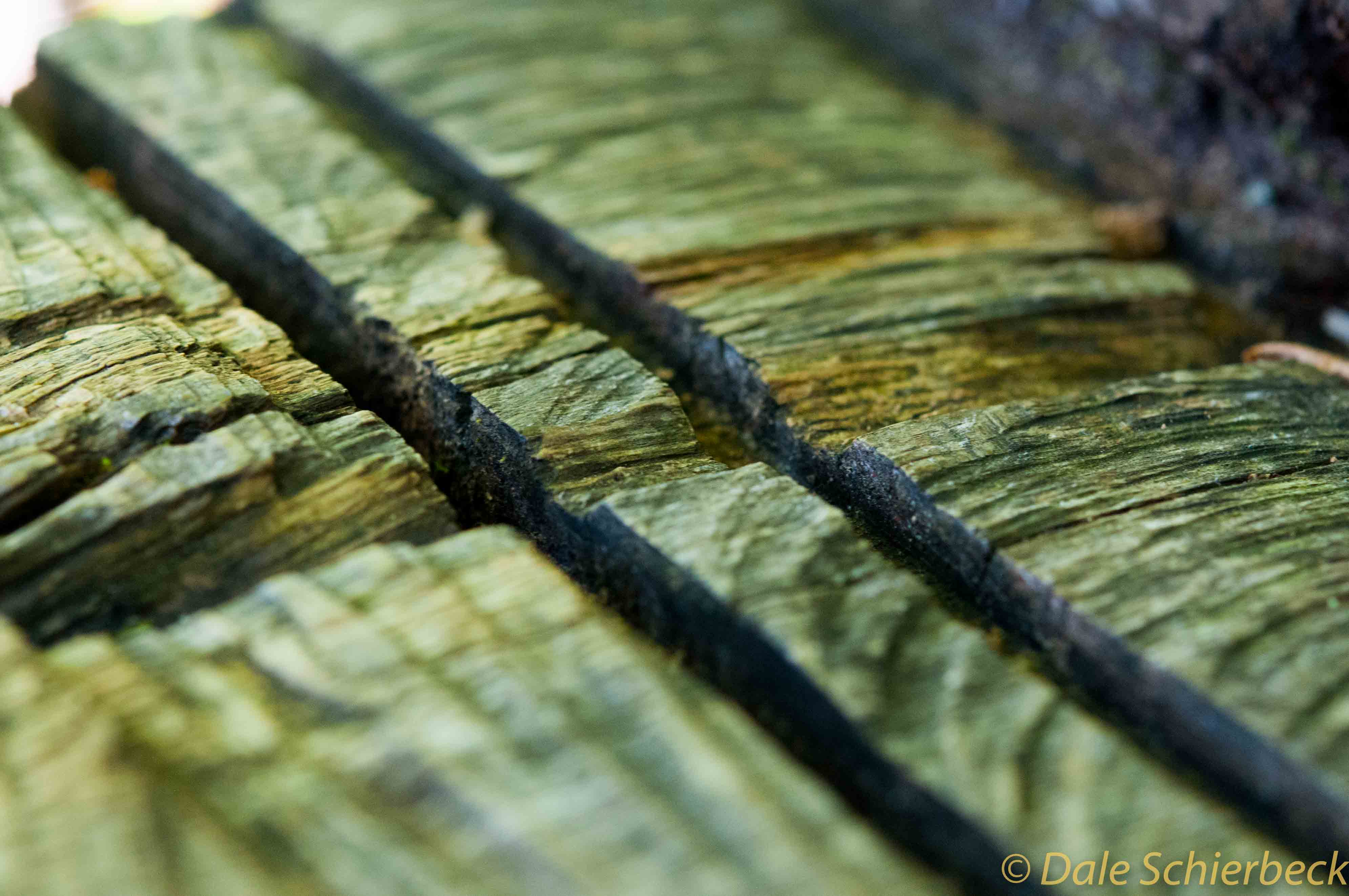 Wood_Cut-3