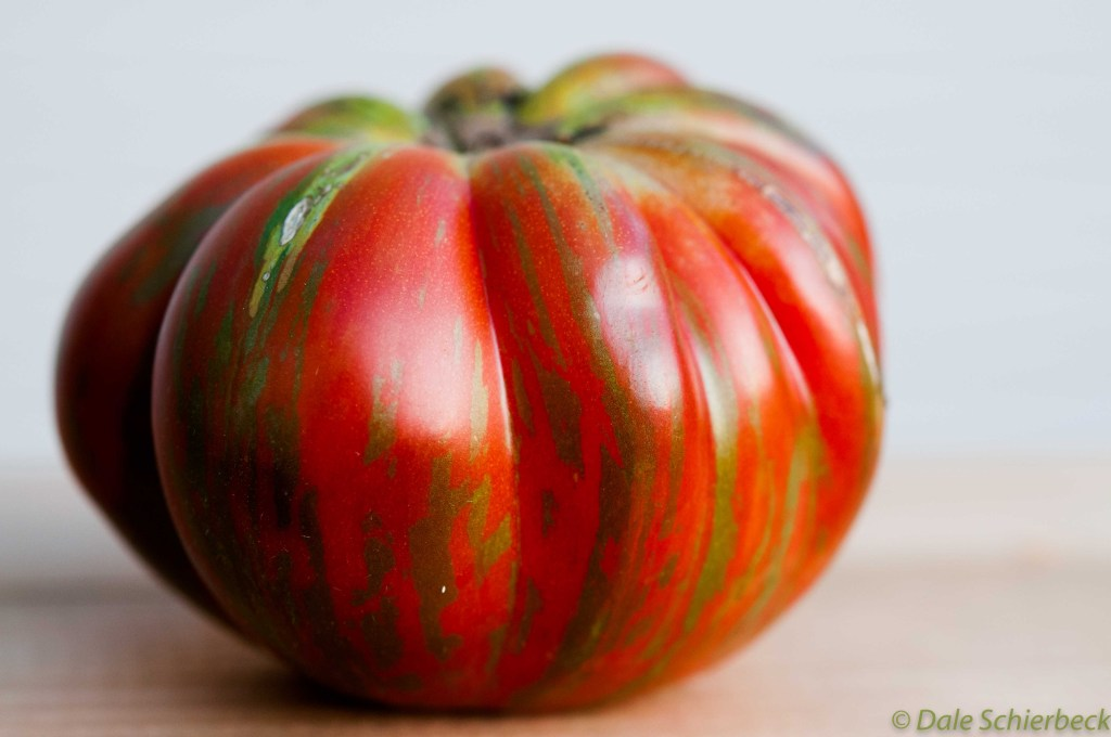 Coassack Tomato -6