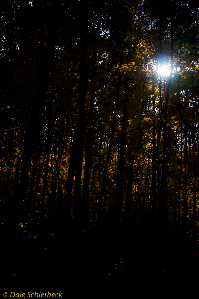 Forest Nocturne