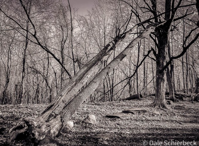 on the death of a tree