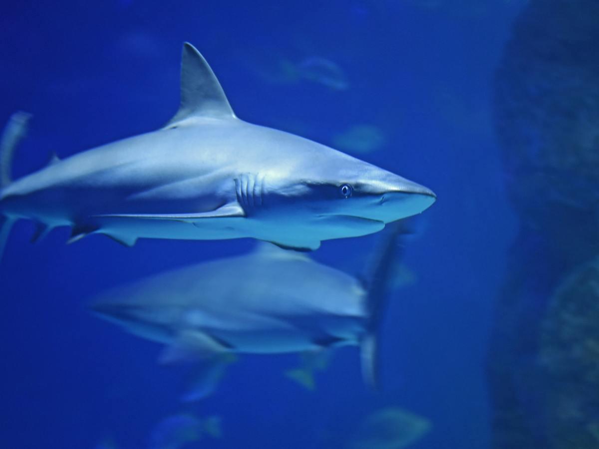 Galapagos Sharks - Photo by David Clode on Unsplash