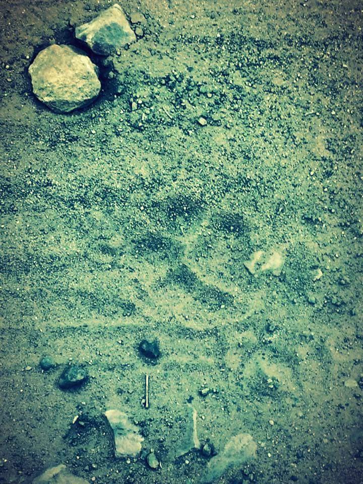 Tadoba Andhari Tiger Reserve                                                                                |Tales Of Tadoba|