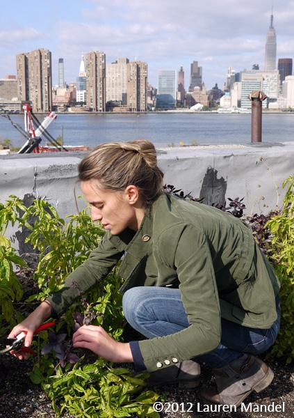 """Tending to Skyline Crops"" - Eagle Street Rooftop Farm, NY    (c)2012 Lauren Mandel"
