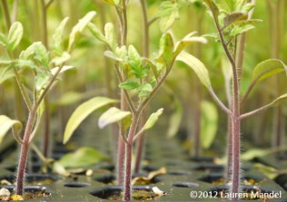 """Seedling Envy"" - SHARE Food Program, PA || (c)2012 Lauren Mandel"