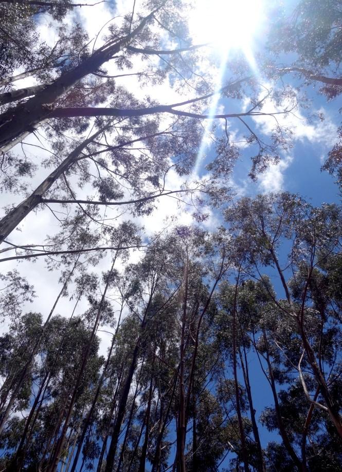eat_wear_wander_trees3