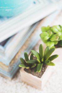 Zen green plant -21-final