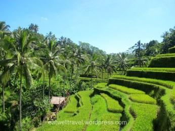 Rizières de Tegallalang, Bali
