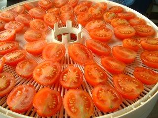 Tomato Daze
