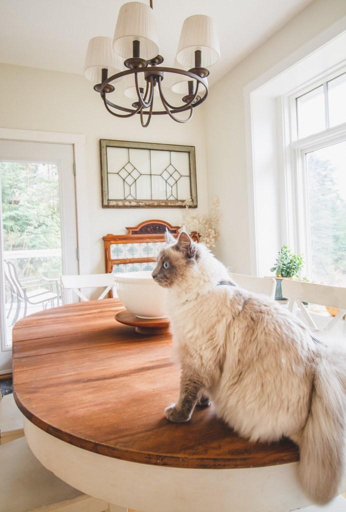 Furniture Rehab: Antique Restoration and Repair