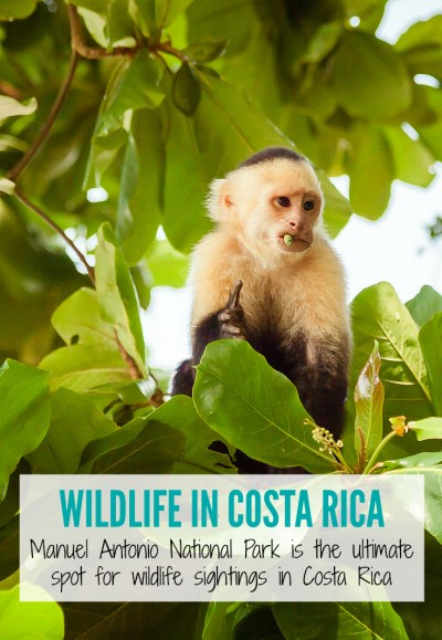 Manuel Antonio National Park in Costa Rica is the ideal spot to find wildlife during your next trip to Costa Rica | www.eatworktravel.com - The luxury adventure couple!