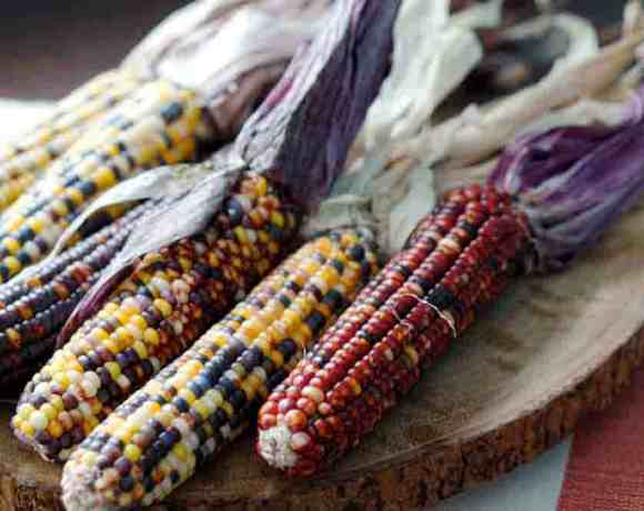 Can you eat Indian Corn? -> YES! and here's how.