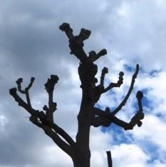 evolution arbre