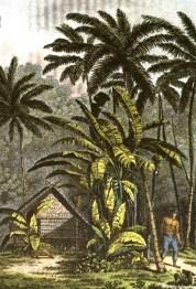 cracatao-habitation-sur-lile-illustartion-de-loceanie-jules-verreaux-1832