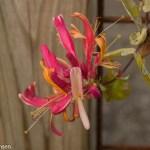 Blomster i haven selv om det er midt i oktober