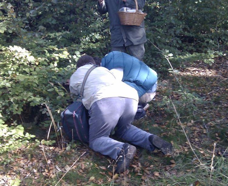 Klaus og Martin finder svampe