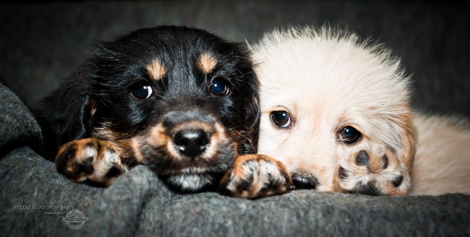 Two sad puppies
