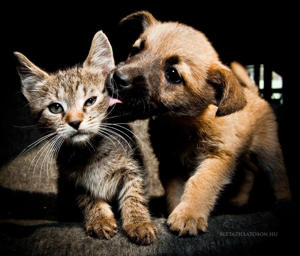 Puppy kisses kitty
