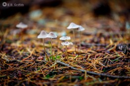 Tiny 'Shrooms - 300mm, 1/30 @ f/5.6