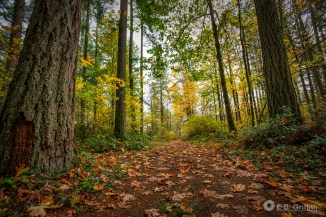 Autumn Path - 16mm, 1/60 @ f/4