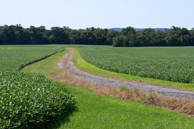 The route leads through the Montgomery Agricultural Preserve with great views of the area. This picture shows a private path not accessible to the public, in between agricultural plots seen from River Road.