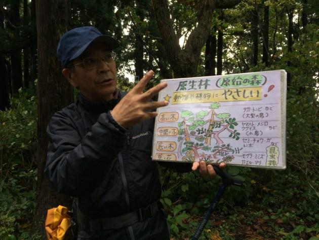 原生林の構成